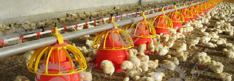 ساخت دانخوری مرغداری