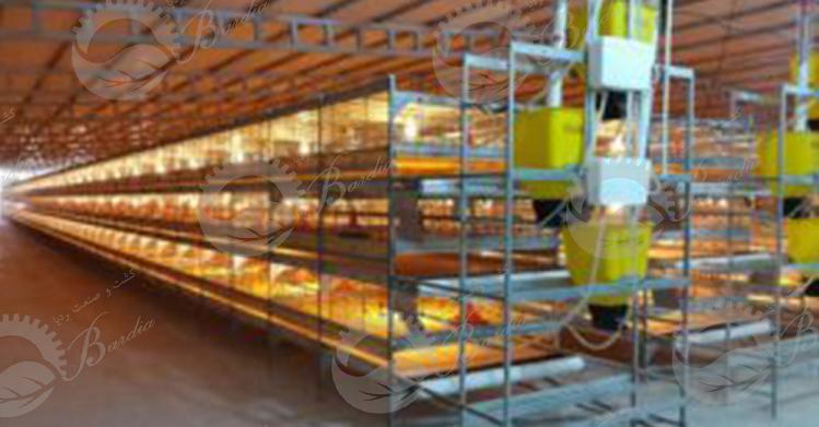 تولید و فروش قفس مرغ