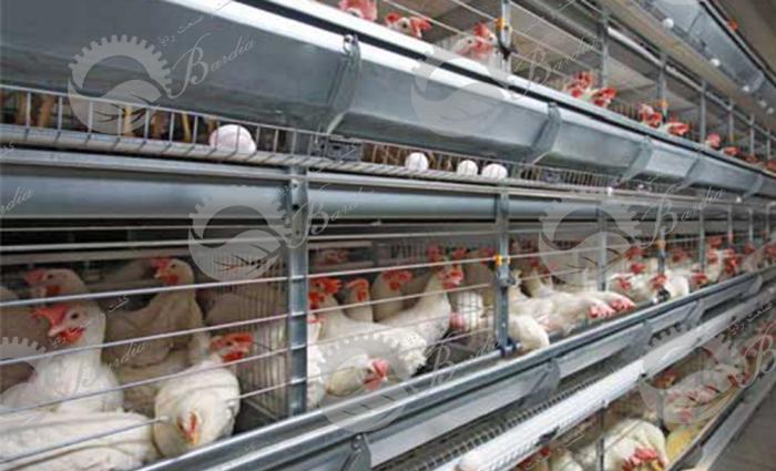 قفس سه طبقه مرغ تخمگذار