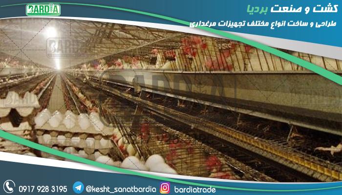 قفس پرورش مرغ