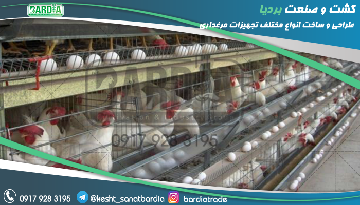 ساخت قفس مرغ تخمگذار