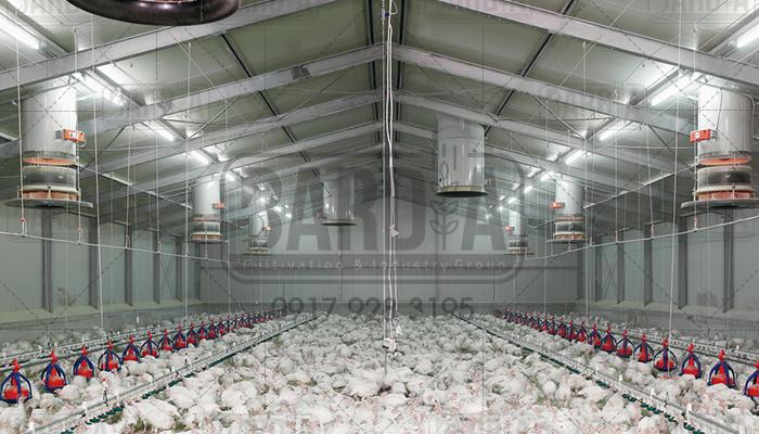 فروش تجهیزات مرغ گوشتی